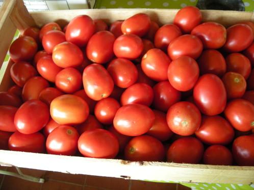 Tomate roma pour sauce (si dispo)