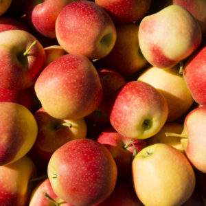 Pomme Gala JardiLouit