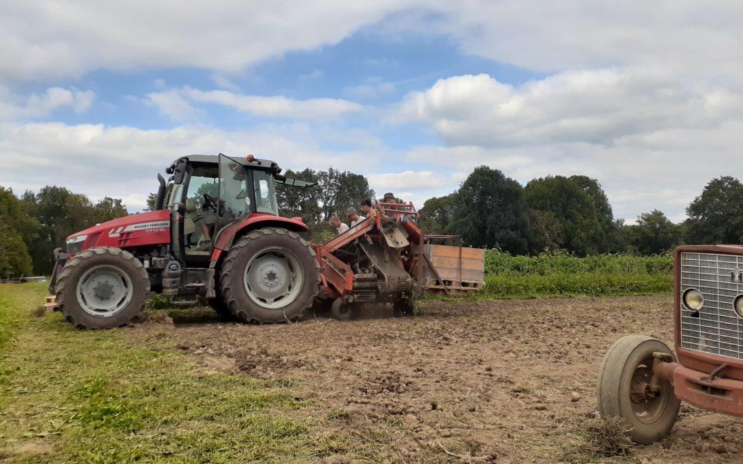 La récolte des pommes de terre c'est en ce moment !